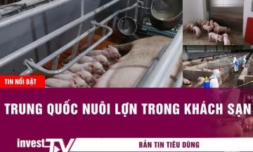 Tin tức tiêu dùng |Trung Quốc nuôi lợn trong khách sạn | INVEST TV